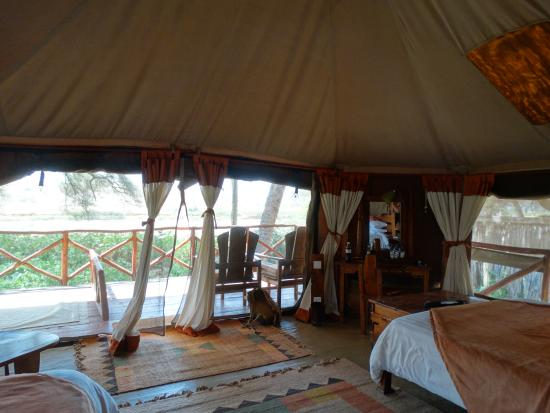 Wildlife Picture Of Elephant Bedroom Camp Samburu National Reserve Tripadvisor