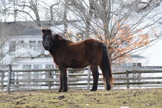 Carlisle, แมสซาชูเซตส์: horse