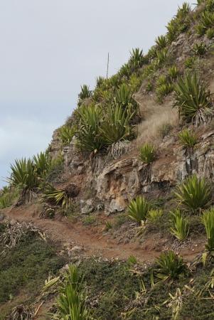 Sao Nicolau, Kape Verde: Parque Natural do Monte Gordo