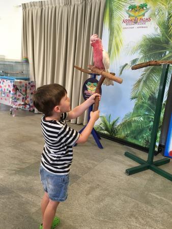 Ashmore Palms Holiday Village
