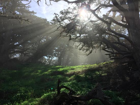 Point Lobos State Reserve: Cypress Grove