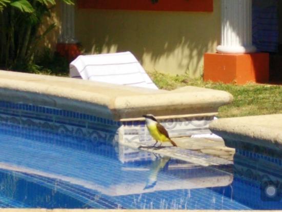 Hotel Esperanza: Jacuzzi Waterfall