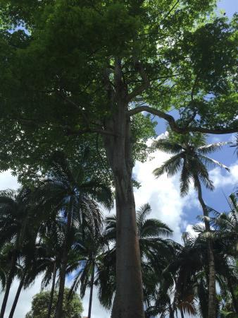 Distrito de Grand Port: Vue du Jardin