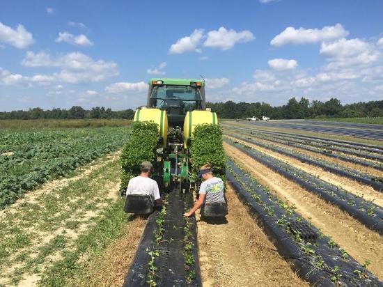 Ruther Glen, VA: Planting crops!