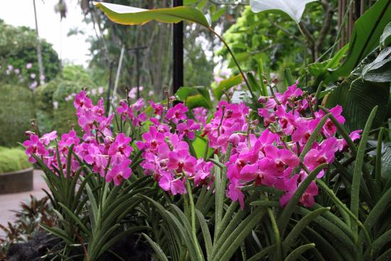 Superior National Orchid Garden: Orchids In The Garden