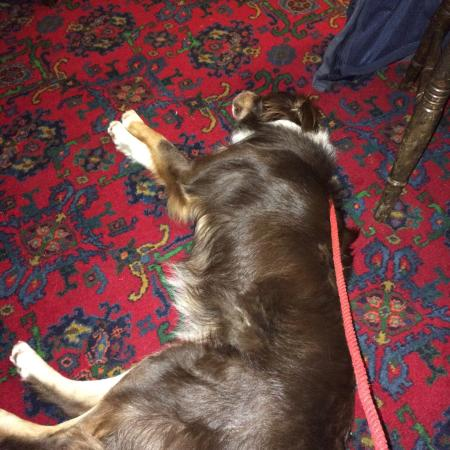 The Yewdale Inn Restaurant: Our collie chilling in the bar