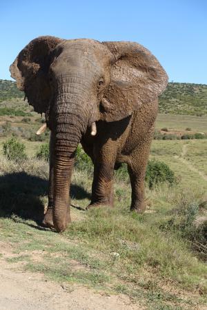 Addo, Sudáfrica: Orange Elephant Backpackers