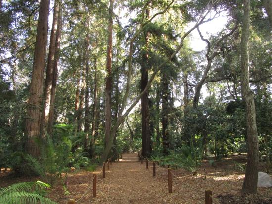 Descanso Gardens: Ancient Forest
