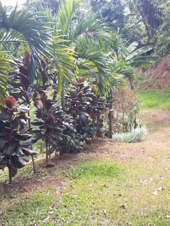 Grecia, Kostaryka: Great spot