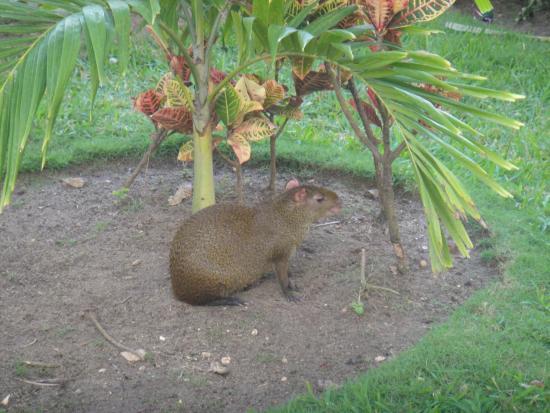 Viva Wyndham Maya : well mantained grounds