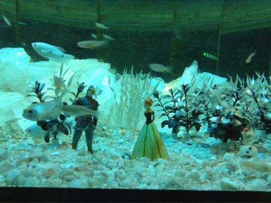 photo1.jpg - Picture of Bergen Aquarium, Bergen - TripAdvisor