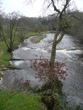 Longtown, UK: View from Roe Deer Cabin