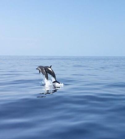 Wonderful dolphin sightings with La Paloma Lodge guide, Randal.