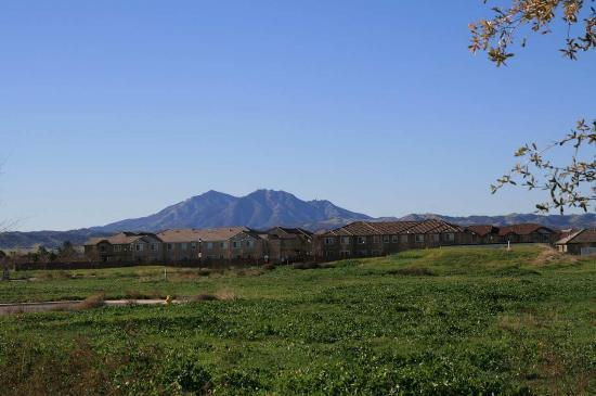 Brentwood, CA: View of Mt. Diablo