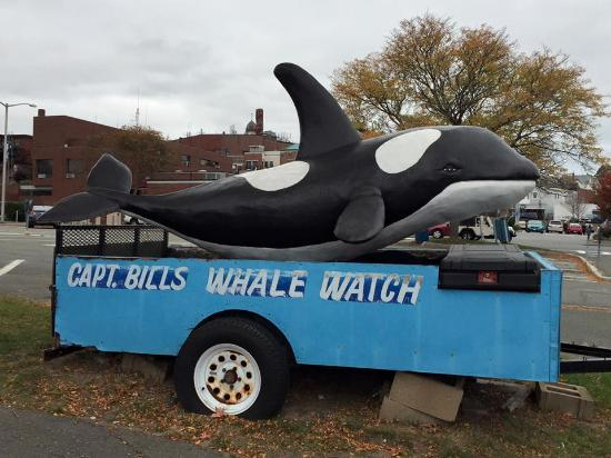 Capt Bill & Sons Whale Watch: The logo
