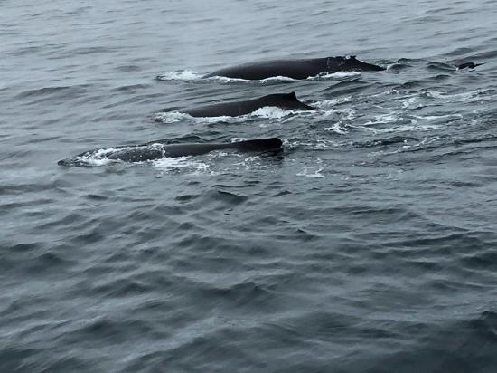 Capt Bill & Sons Whale Watch: Three at once!