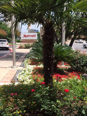 Marriott Plaza San Antonio: View from the front lined by beautiful flowers