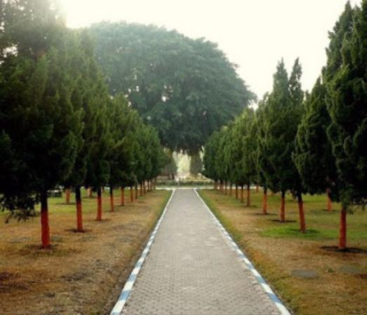 Lumajang, إندونيسيا: suasana yang asri ditambah lagi dengan adanya pohon beringin besar ditengah alun-alun