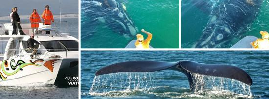 Whale Watchers Hermanus: The experience