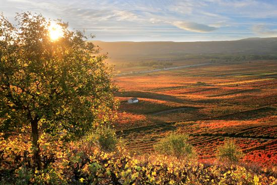 La Rioja, Spain: Vineyards in autumn