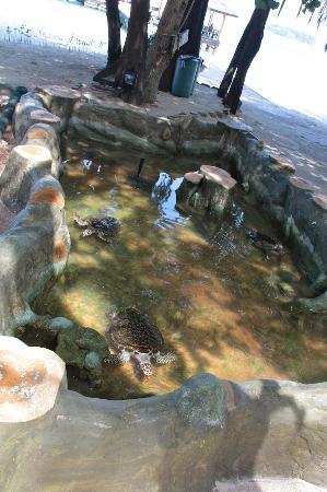 Captive Turtles