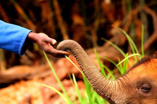 Wild Is Life Trust and ZEN: Moyo