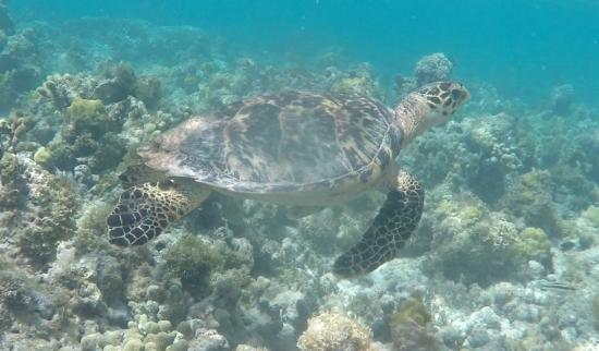 WCT - West Coast Tours Antigua: A Turtley Awesome Day at the Reef