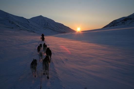Husky Travellers
