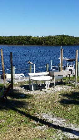 Ruskin, FL: 20160226_140543_large.jpg