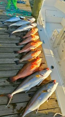 Ruskin, FL: great mixed bag of fresh fish to bring home