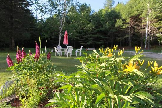 Londonderry, VT: Lawn area of Snowdon Chalet