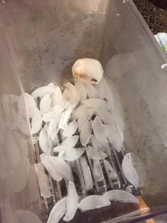 Westin Monache Resort Mammoth: Ice tray had dirty snowball in it.