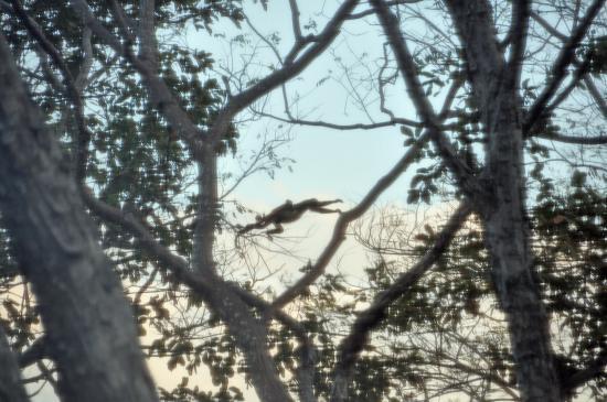 포시즌스 리조트 코스타리카 사진