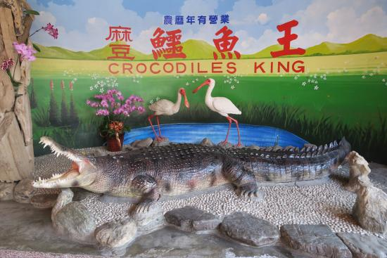 Madou Crocodiles King