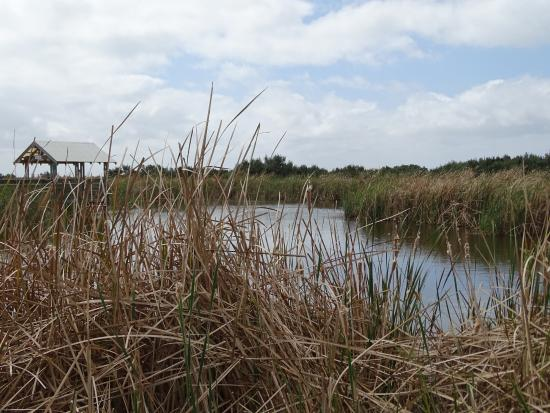 Laguna Madre Nature Trail : Wetland plants and bird watching blind