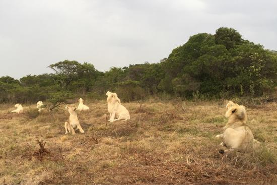 Inkwenkwezi Private Game Reserve Safari Lodge: photo0.jpg