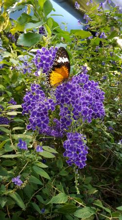 Museum Of Science: Vibrant Beauty Of Butterfly Garden