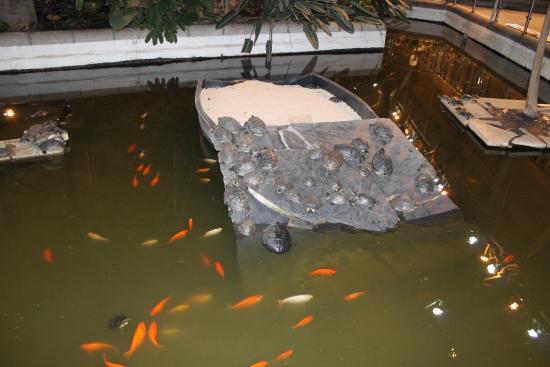 Peces y tortugas dentro de la estaci n de atocha picture for Vivero para peces