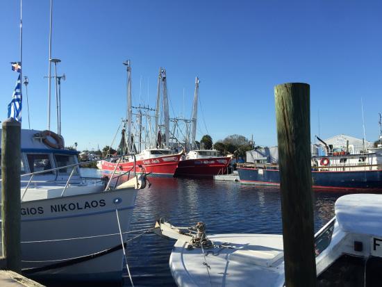 great time in greek town picture of tarpon springs sponge docks rh tripadvisor com