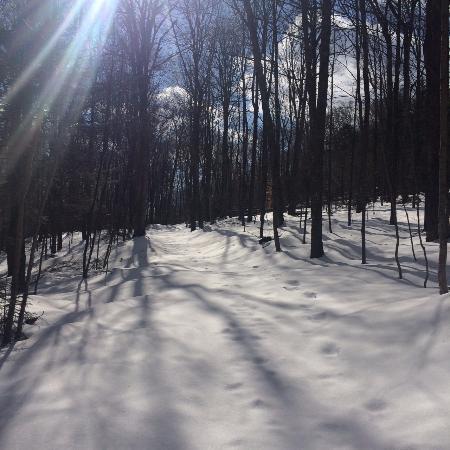 Chickadee Trail