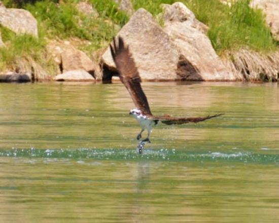 Cascade, ID: Sit on our beach watching the Osprey catch their dinner