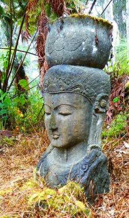 Foto de Buddha's Cup Coffee Estate