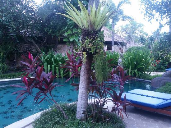 Samhita Garden: IMG_20160224_173707_large.jpg