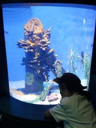 Estrela Do Mar Picture Of Aquarium Of The Pacific Long