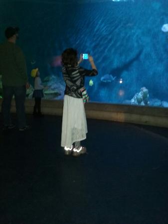Dubuque, IA: Great Museum!!!