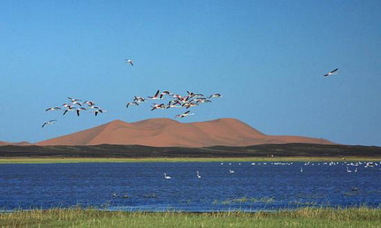 Lake Dayet Sriji - The Lake of Merzouga, Merzouga Traveller Reviews -  Tripadvisor