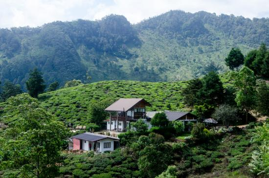 Hill Safari Eco Lodge Ohiya: The very First view of the hotel