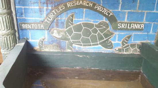 Bentota Turtles Research Project Sri Lanka