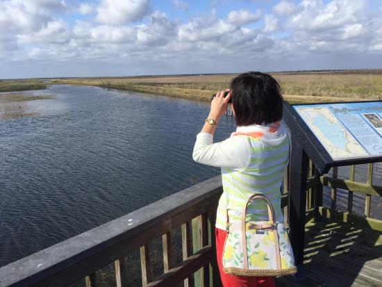 Brazoria, เท็กซัส: Birdwatching