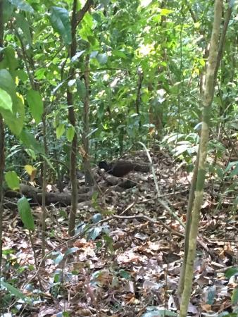 Nicoya, Costa Rica: Nice 2k walk through the jungle!
